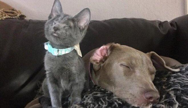 Aklā kaķenīte Laima, kas sadraudzējusies ar suni