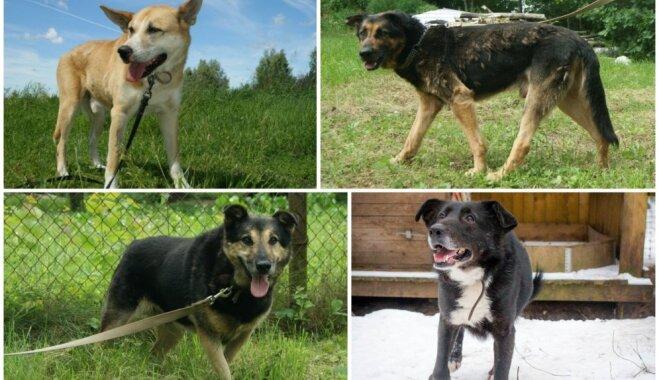 Visa dzīve bija priekšā. Mājas meklē četri suņi, kas patversmē mīt gadiem ilgi