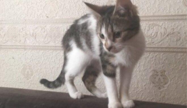 Lindas acu skatiens savaldzināja Arinu: stāsts par īpašo satikšanos ar kaķi