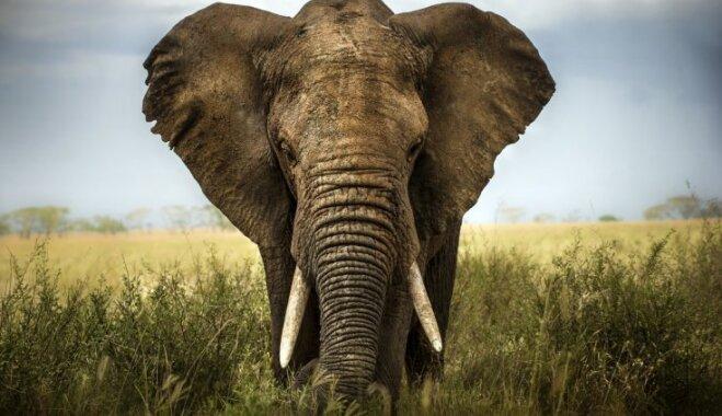 Слоны, подкова, ромашковый чай и гирлянды: 15 способов привлечь удачу в дом