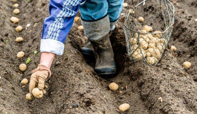 Самые благоприятные дни для посадки овощей этой весной: советы фенолога Вилиса Букшса