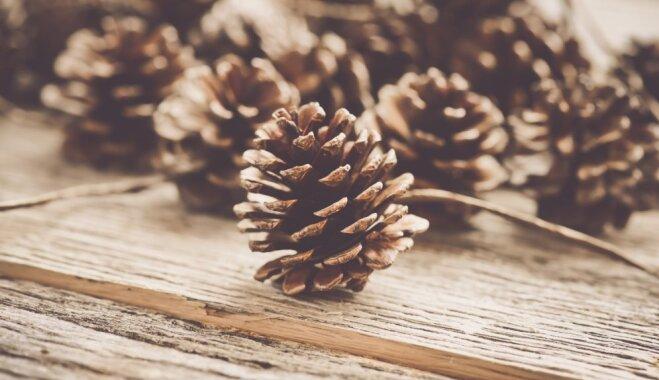 Radoša nodarbe: aromātiski čiekuri mājas smaržai un svētku noskaņai