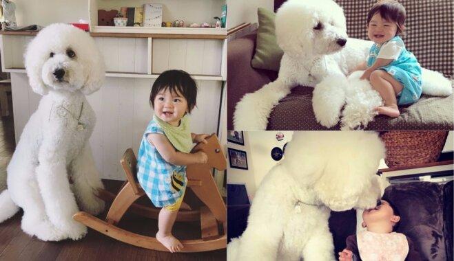 Milzu pūdeļa Riku draudzība ar mazu japāņu meitenīti – foto, kas sajūsminājuši 'Instagram' lietotājus