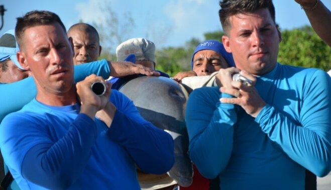 Īpašā glābšanas operācijā Kubā no viesuļvētras 'Irma' pasargā sešus delfīnus