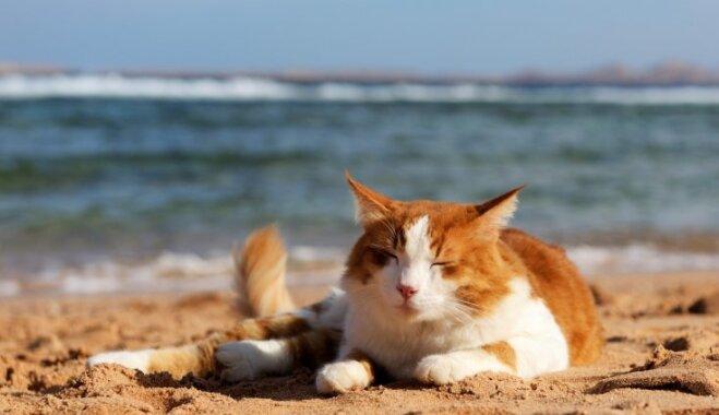 Море волнуется: самые опасные пляжи мира