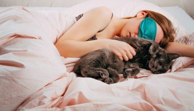 Gultā ar mājas mīluli: plusi un mīnusi gulēšanai kopā ar kaķi