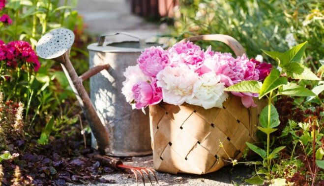 Подгузник, водка и крапива: 12 необычных и дельных советов по уходу за садом