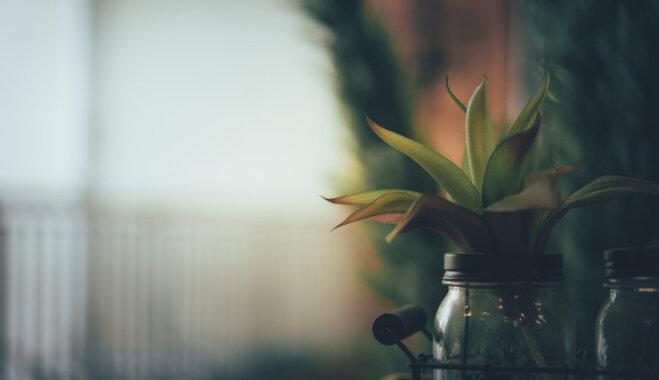 В темноте, да не в обиде. Комнатные растения, которые любят тень