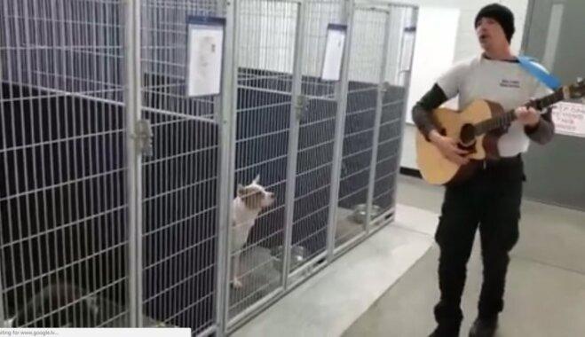 Aizkustinošs video: Mūziķis suņiem patversmē ASV velta serenādi, kuras laikā mīluļi apklust