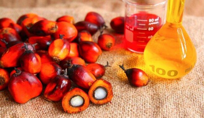 Veselīga dzīvesveida bubulis palmu eļļa: kas tā ir un vai tiešām tik kaitīga