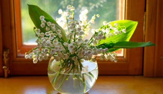 Smaržas un dailes eiforija: kā vāzē uzglabāt maijpuķītes