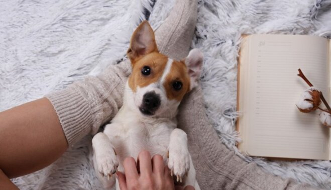 """Вечер с """"собакой-обнимакой"""": в Сан-Франциско одиноким постояльцам отеля предлагают необычную услугу (ВИДЕО)"""