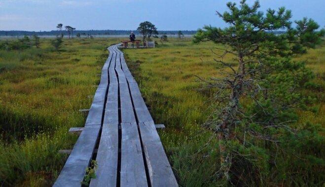 ФОТО. Тропа через болото Дуникас: 5 километров умиротворения и тишины