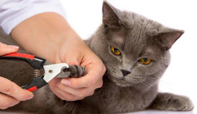 Kā pareizi rūpēties par kaķa higiēnu?