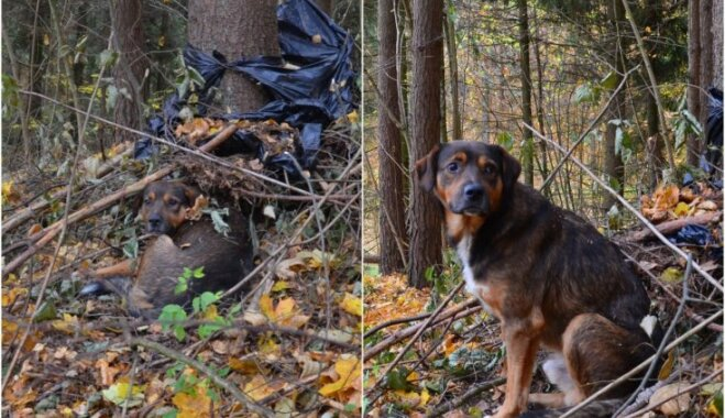 Драма в Вильнюсе: хозяин уехал, собака осталась сторожить усадьбу