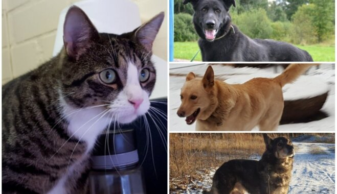 Visus vieno ilgas pēc mīlestības: saimnieku meklē trīs suņi un runcis Rūdis