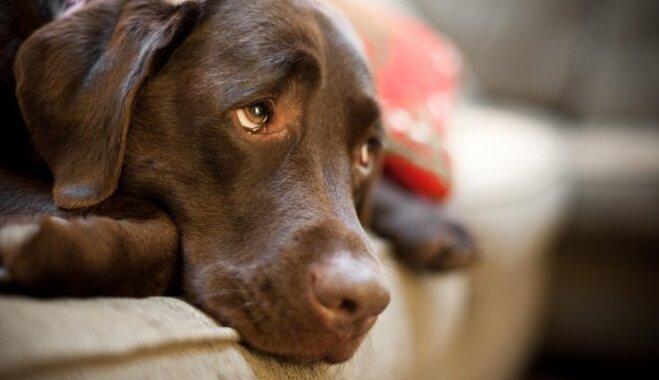 Veterinārārsts: 'saindētie' suņi patiesībā, iespējams, sirgst ar nervu slimību