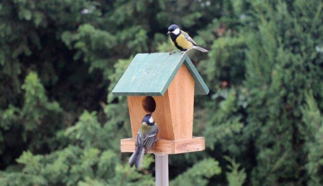 Ornitologu ieteikumi, kā pagatavot putnu būrīti, lai tas nekļūtu par slazdu
