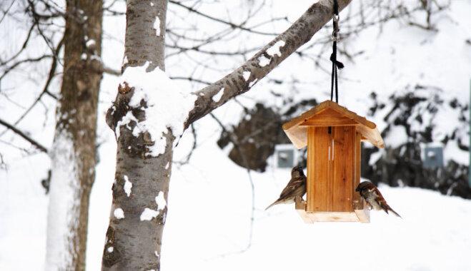 Зимуем вместе: как привлечь птиц в холодное время года