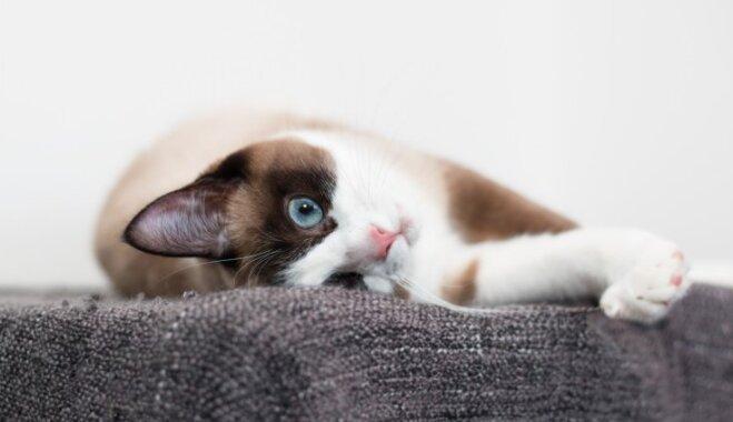 Kaķis ienāk ģimenē: deviņas lietas, kas noteikti jāiegādājas pirms tam