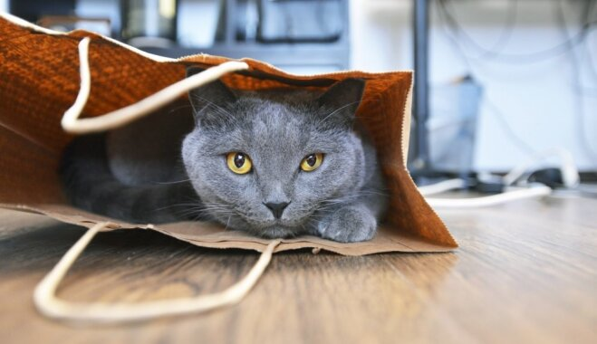 Drošākā vieta mājoklī: kaķi, kas ielīduši dažādos maisiņos un somās