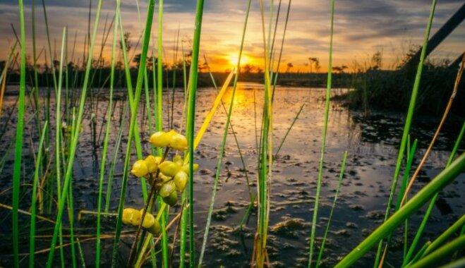ФОТО: Заболоченные тропы Кемери в цветах тихого летнего заката