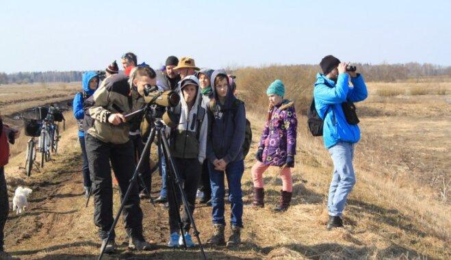 Eiropas Putnu vērošanas dienā būs iespēja klātienē piedzīvot putnu migrāciju