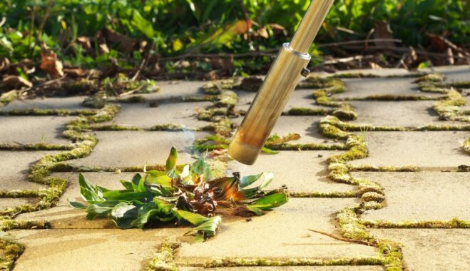 Kad ravēt apnicis: iedarbīgas metodes nezāļu apkarošanā