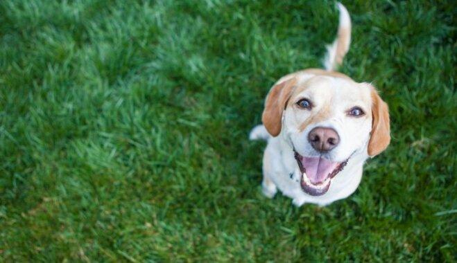Neparasti un amizanti skaidrojumi par suņu horoskopiem