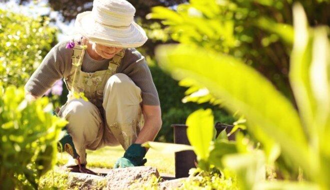Сорнякам тут не место: как правильно мульчировать сад