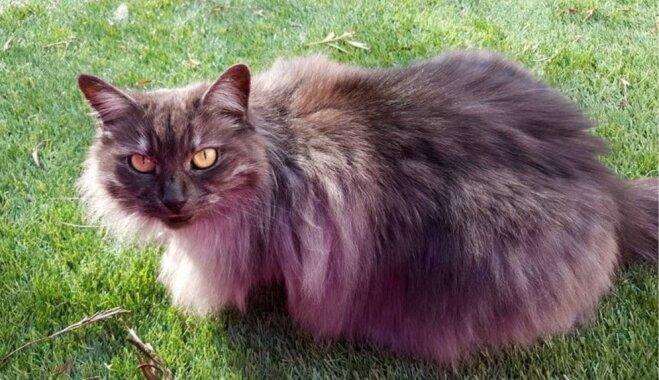 Runcis Tedijs – iespējams, vecākais kaķis pasaulē