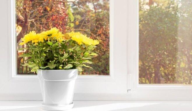 Как улучшить вид из окна: шесть советов