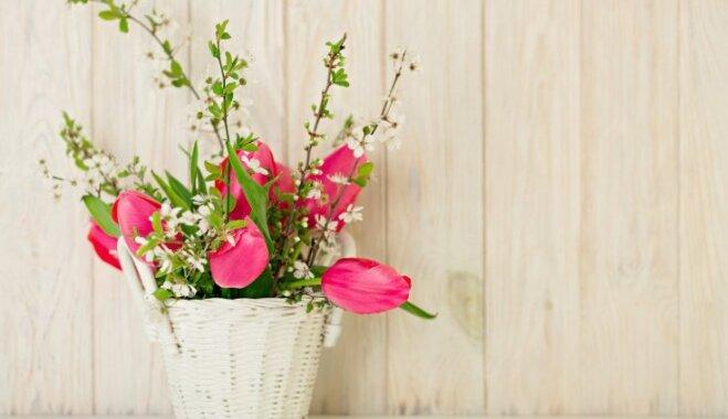 Pavasara vēsmas mājoklī: ziedu kompozīcijas tandēmā ar plaucētiem zariem