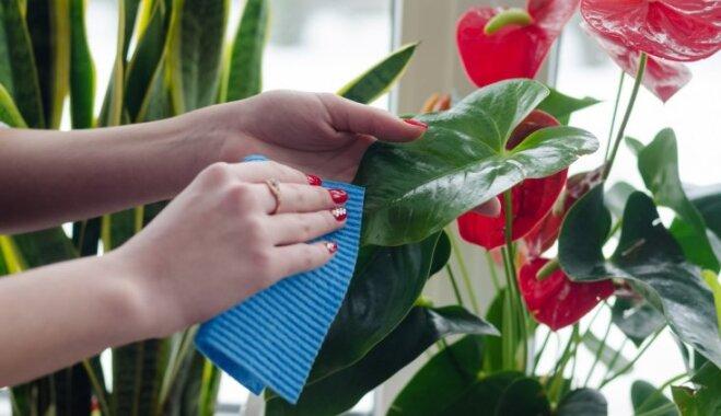 Как правильно мыть и чистить комнатные растения