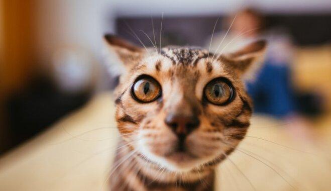 Зоологи поделили кошек на правшей и левшей