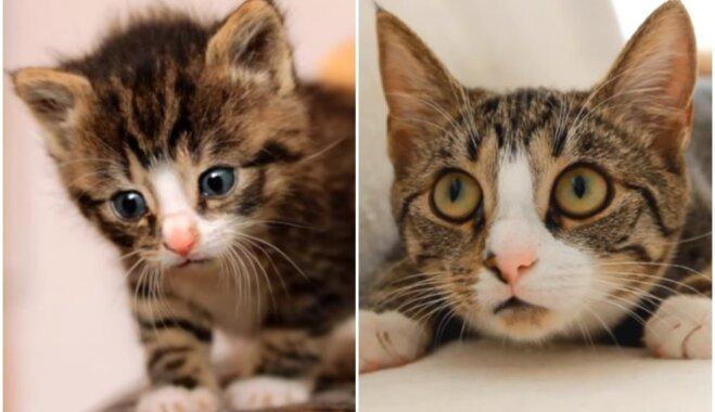 Video: Septiņi gadi septiņās minūtēs – kā izauga kaķi, ko vērojuši miljoniem cilvēku