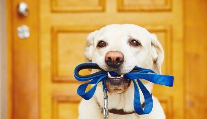 Pastaiga ar suni bez pavadas Rīgā: kur tas ir atļauts, bet kur aizliegts