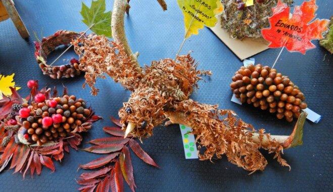 Foto: Salaspilī noskaidroti brangāko ķirbju audzētāji