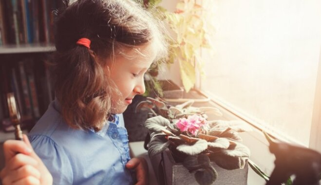 Tikai ar acīm un labāk pa gabalu no maziem bērniem – indīgie telpaugi