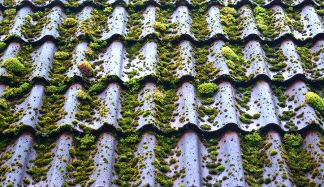 Tautas padomi, kā likvidēt sūnas uz taciņām, dārza mēbelēm un jumta