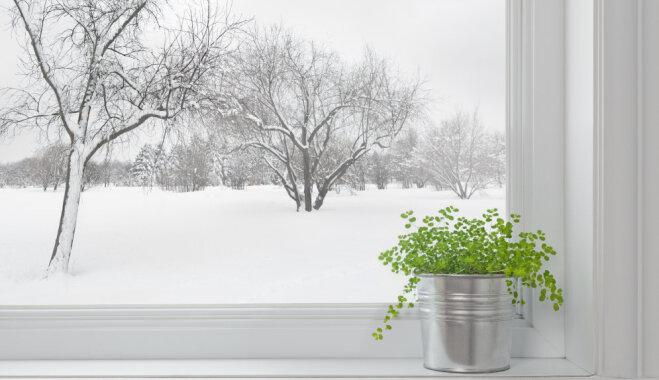 Dārza darbu kalendārs - janvāris