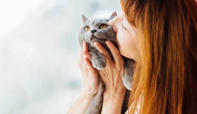 Turēšana rokās un piena došana – saimnieka darbības, kas kaķim var nepatikt