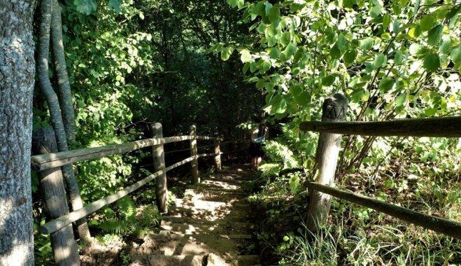 Pavasarī vizbulīšu grava, bet rudenī pašiem sava Sigulda: Žibgravas dabas taka Alsungā