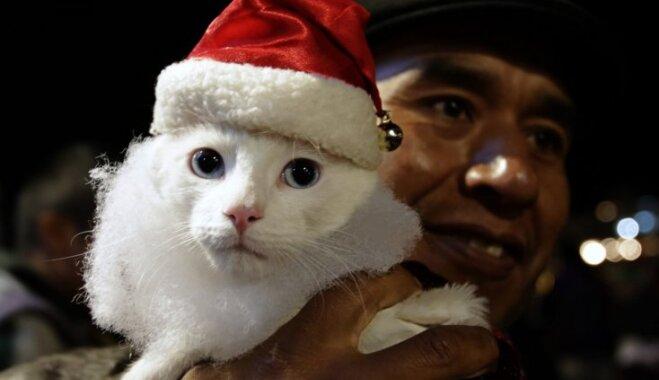 Фоторепортаж: празднование Рождества в мире