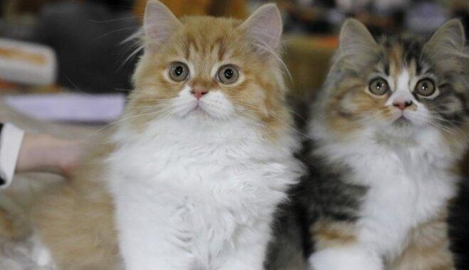 Foto: 226 šķirņu suņi, 24 šķirņu kaķi un citi zvēri tiekas dzīvnieku izstādē Ķīpsalā