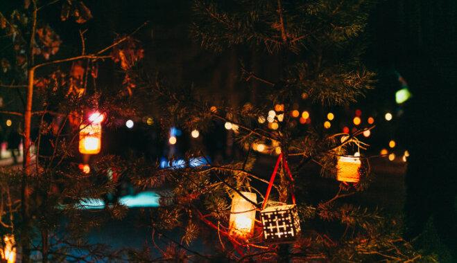 Ziemassvētkos botāniskajā dārzā Salaspilī iedegsies 'Sveču mežs'