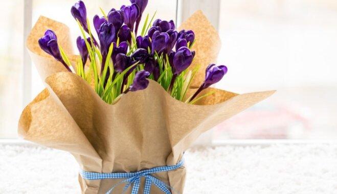 Dāvanā telpaugs: idejas, kā radoši iesaiņot augus