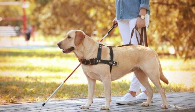 Smiltenē notiks treniņnometne servisa suņiem; iedzīvotāji aicināti neglaudīt mīluļus