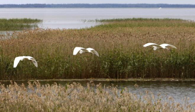 Putni un pavasaris pie Lubāna ezera: kādas apskates vietas slēpjas tuvējā apkārtnē