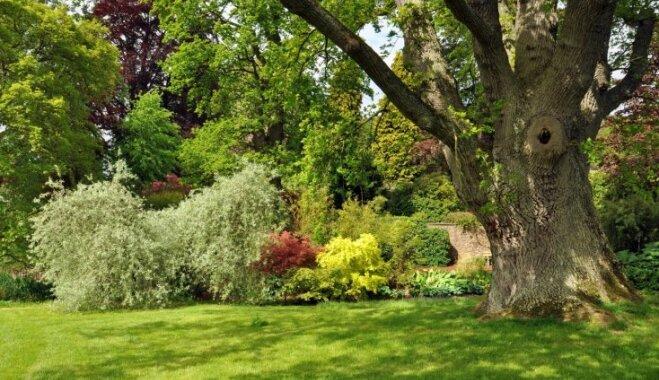 Koki piemājas pagalmā – kādus stādīt atbilstoši tautas ticējumiem